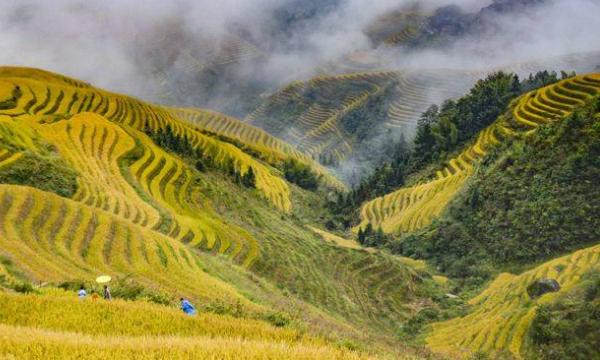 广西雾野农业科技有限公司选用锐宜微信会员卡管理系统